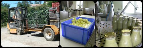 Récolte et transformation des courgettes - Août 2015